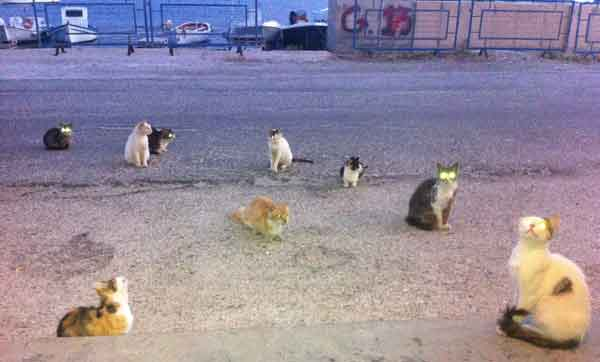 Els gats són els reis de Grècia