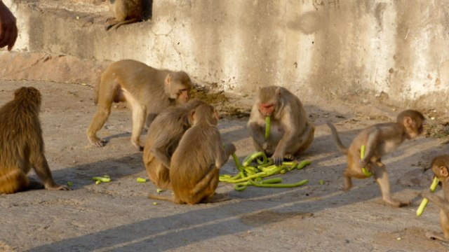 Temple del sol. Jaipur