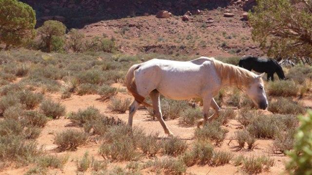 Monument Valley. Cavalls