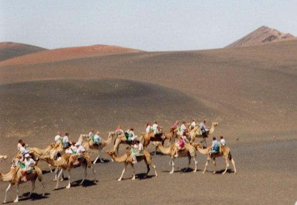 Timanfaya. Camells