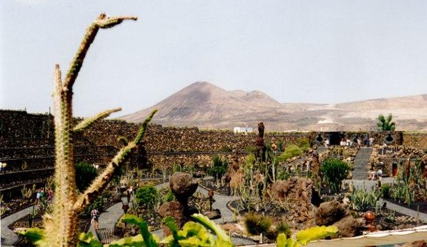 Jardi de cactus. Lanzarote