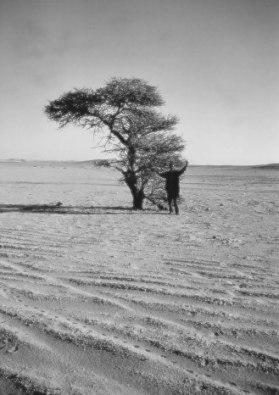 Desert Algeria.