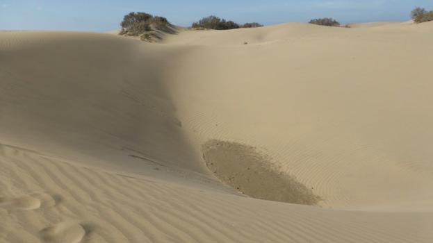Dunes de Maspalomas. Gran Canaria