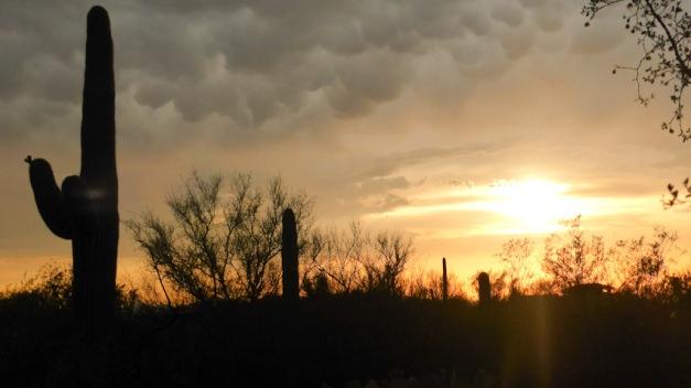 Saguaro Park. Arizona