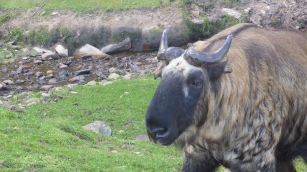 Zoo Timphu. Taquin