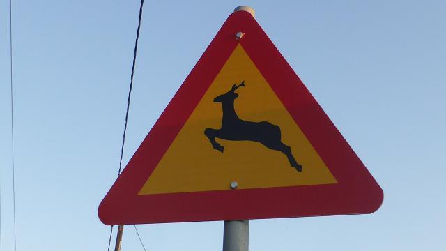 perill cervols