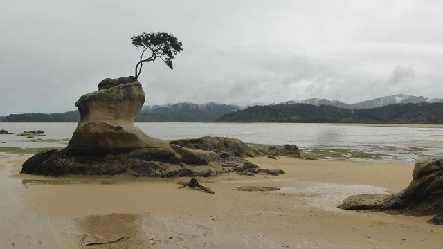 tinline-bay-abel-tasman-park